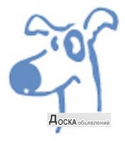 Ветеринарная вызывная служба ДИНГО.