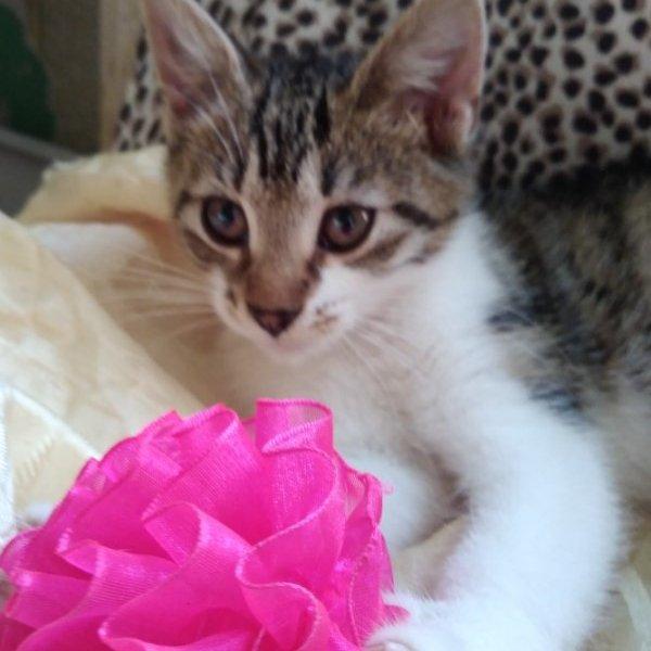 Симпатичные котята девочки ищут дом