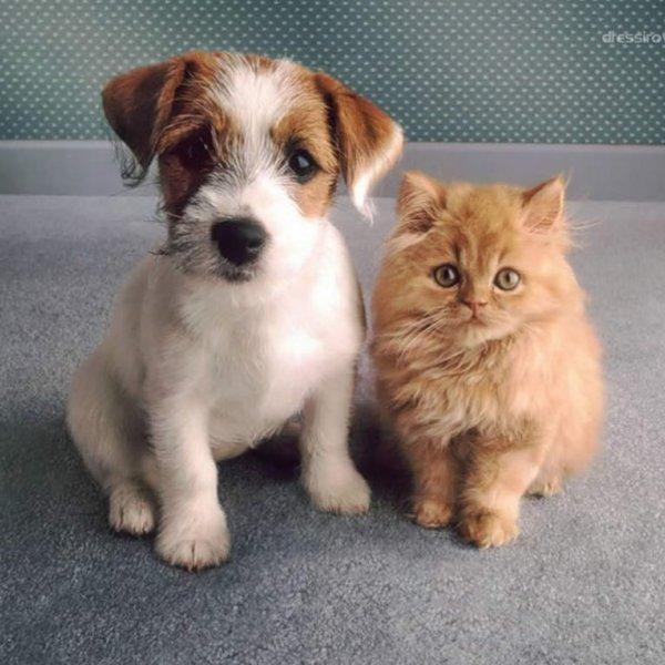 Купить :  Биопрепараты для здоровья всех домашних животных