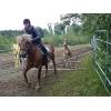 Детский конный лагерь в Финляндии