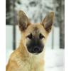 Добрые и красивые щеночки ищут дом