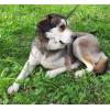Ласковая спокойная собачка Дженни (1 год)