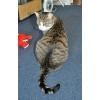 Очень ласковый кот Филька в самые лучшие руки