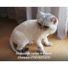 Стрижка кошек и собак на дому