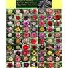 Самые красивые цветы, Цветущий бонсай адениум сортовые семена от 15 руб