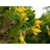 Саженцы лиственных растений