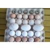 Сельскохозяйственные птицы, инкубационные яйца.