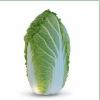 Семена пекинской капусты KS 340 F1 фирмы Китано