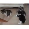 три котенка в хорошие руки