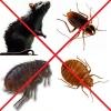 Уничтожение насекомых и грызунов. Самое выгодное предложение