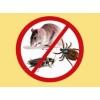 Выведение тараканов, клопов. Уничтожение крыс, кротов
